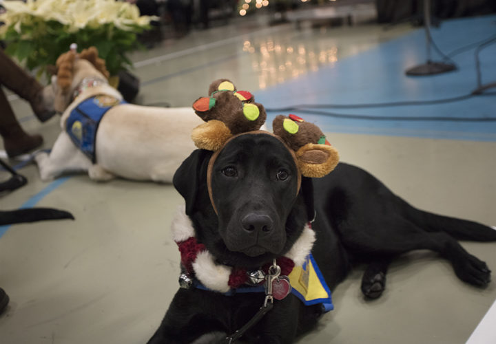 Craig Hospital therapy dogs dress up for the holiday music program