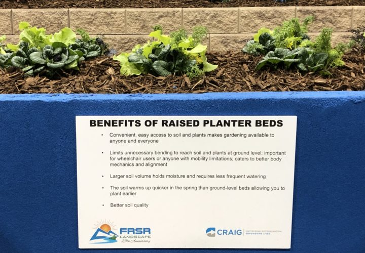 Benefits of raised planter beds for accessible design