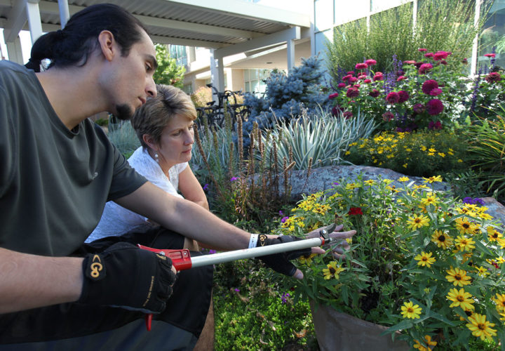 The greenhouse and accessible gardens include flowers and vegetables through the Therapeutic Recreation Program at Craig Hospital